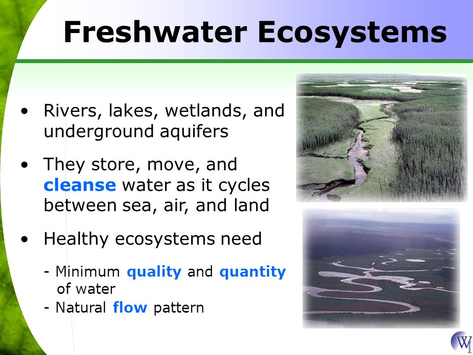 Freshwater Ecosystems Rivers, lakes, wetlands, and underground aquifers They store, move, and cleanse water as it cycles between sea, air, and land Healthy ecosystems need - Minimum quality and quantity of water - Natural flow pattern