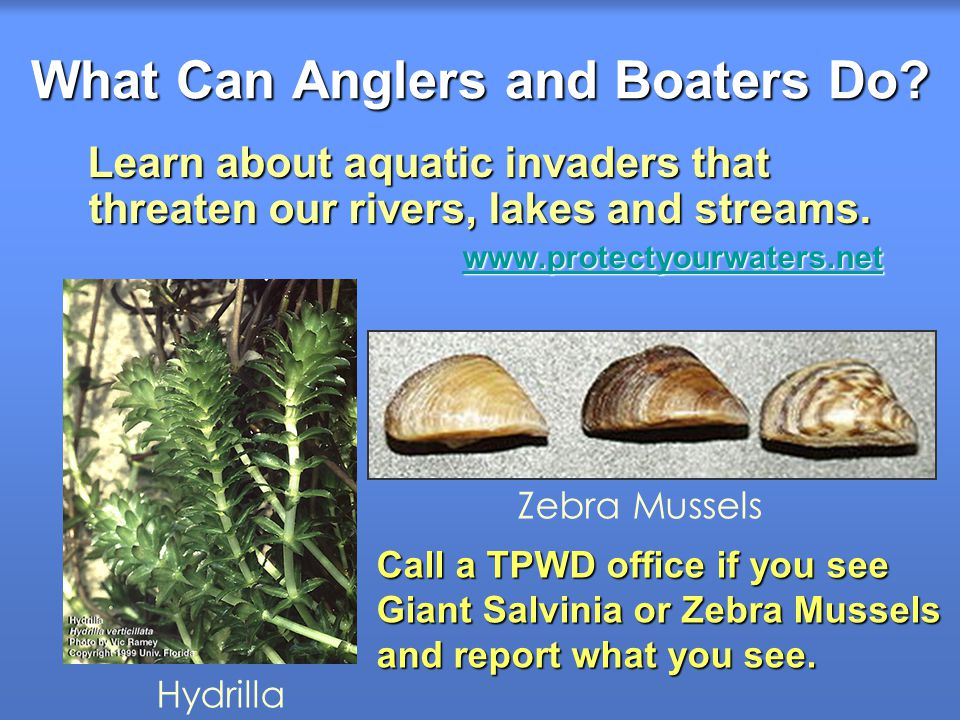 What Can Anglers and Boaters Do? Learn about aquatic invaders that threaten our rivers, lakes and streams. Learn about aquatic invaders that threaten