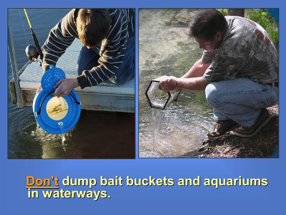 Dont dump bait buckets and aquariums in waterways.