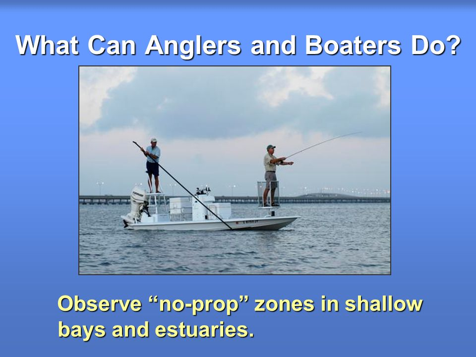 What Can Anglers and Boaters Do.Observe no-prop zones in shallow bays and estuaries.