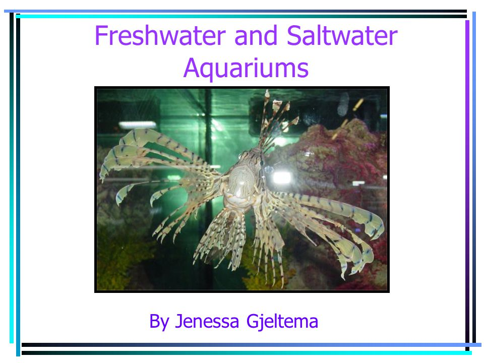 Choose Your Aquarium Type The specific aquarium setup will depend upon the requirements of the species you choose.