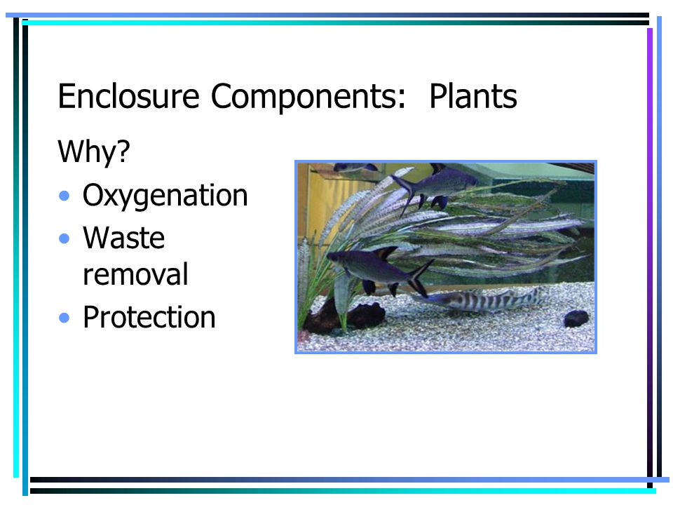Enclosure Components: Plants Why? Oxygenation Waste removal Protection