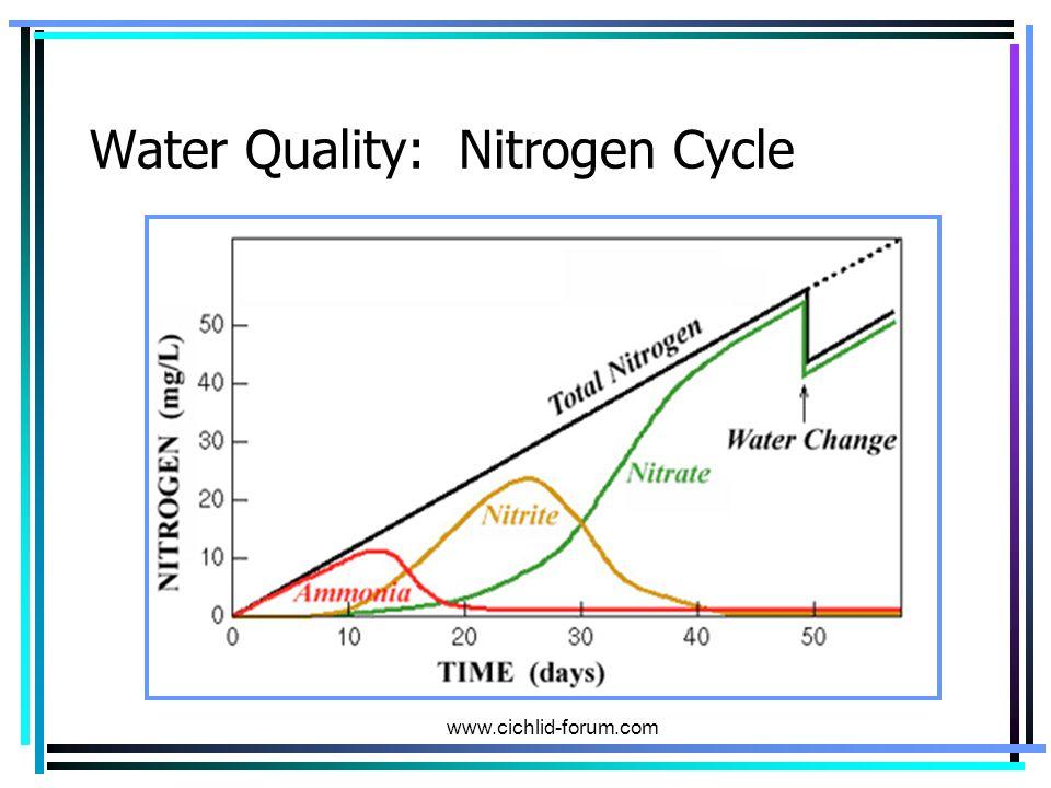 Water Quality: Nitrogen Cycle www.cichlid-forum.com