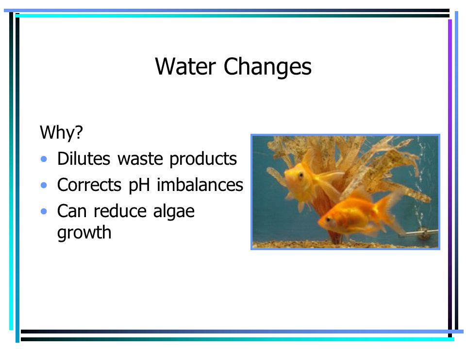 Water Changes Why? Dilutes waste products Corrects pH imbalances Can reduce algae growth