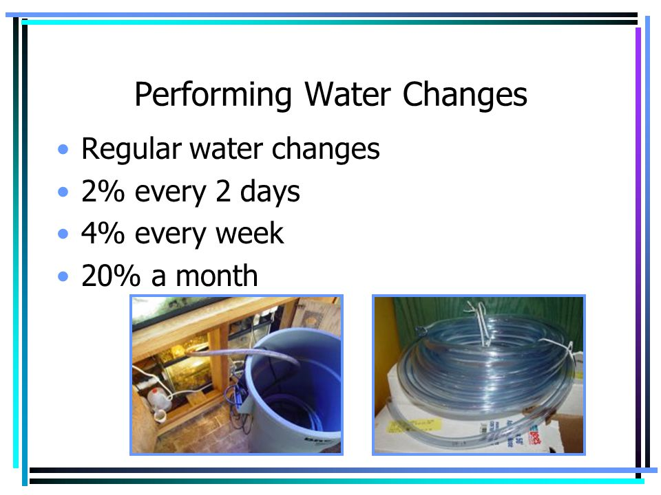 Performing Water Changes Regular water changes 2% every 2 days 4% every week 20% a month