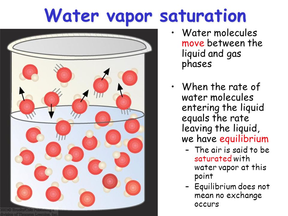 Water vapor saturation Water molecules move between the liquid and gas phases When the rate of water molecules entering the liquid equals the rate lea