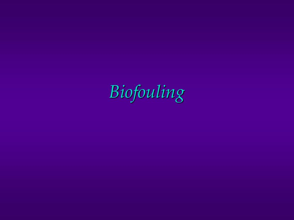 What is Biofouling caused by? FUNGI ALGAE BACTERIA