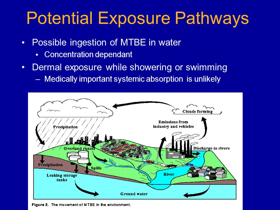 Potential Exposure Pathways Possible ingestion of MTBE in water Concentration dependant Dermal exposure while showering or swimming –Medically important systemic absorption is unlikely