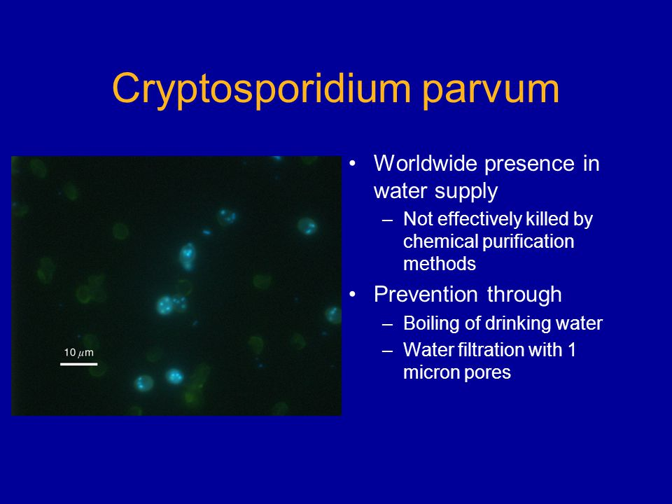 Cryptosporidium parvum Worldwide presence in water supply –Not effectively killed by chemical purification methods Prevention through –Boiling of drinking water –Water filtration with 1 micron pores