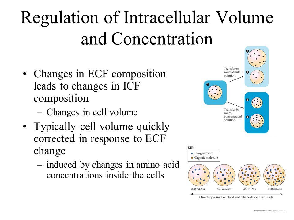 Marine Invertebrates Composition can differ between different fluids: –External environment –Blood & Interstitial fluid (extracellular fluid) –Intracellular fluid