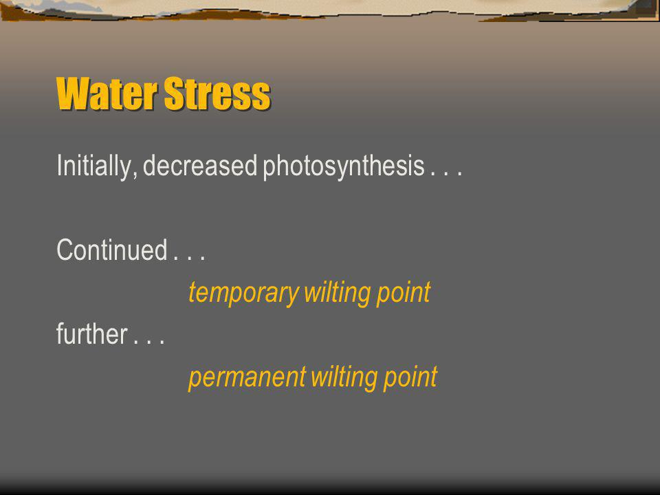 Water Stress Initially, decreased photosynthesis...