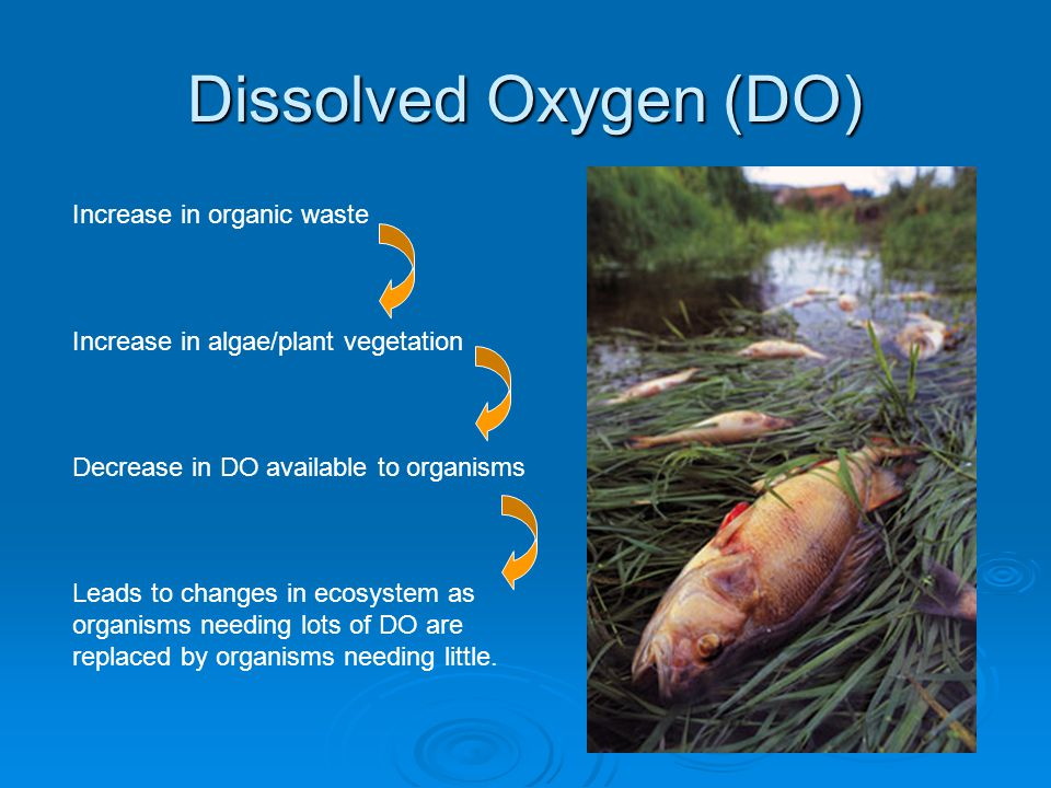 Dissolved Oxygen (DO) Increase in organic waste Increase in algae/plant vegetation Decrease in DO available to organisms Leads to changes in ecosystem