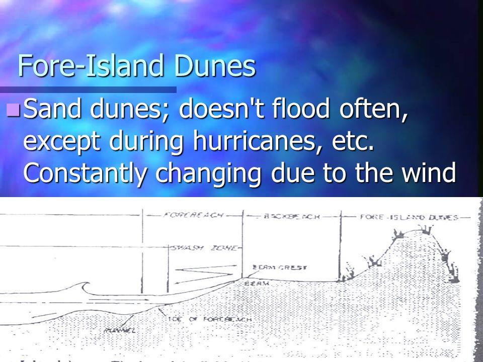 Fore-Island Dunes Sand dunes; doesn't flood often, except during hurricanes, etc. Constantly changing due to the wind Sand dunes; doesn't flood often,