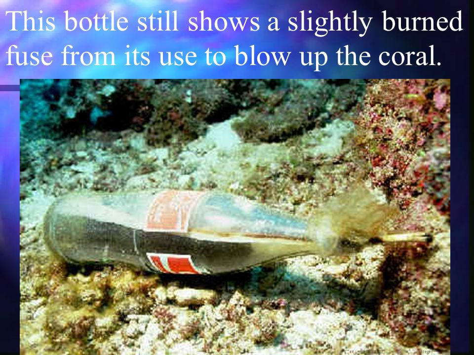 ©1997-2001 Jeffrey N. Jeffords This bottle still shows a slightly burned fuse from its use to blow up the coral.