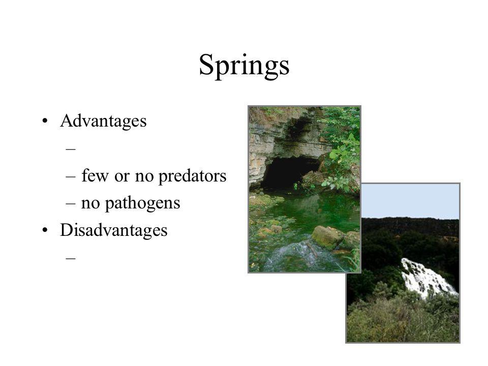 Springs Advantages – –few or no predators –no pathogens Disadvantages –