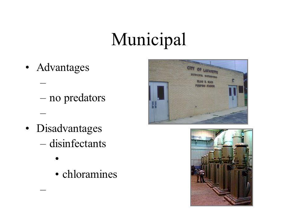 Municipal Advantages – –no predators – Disadvantages –disinfectants chloramines –