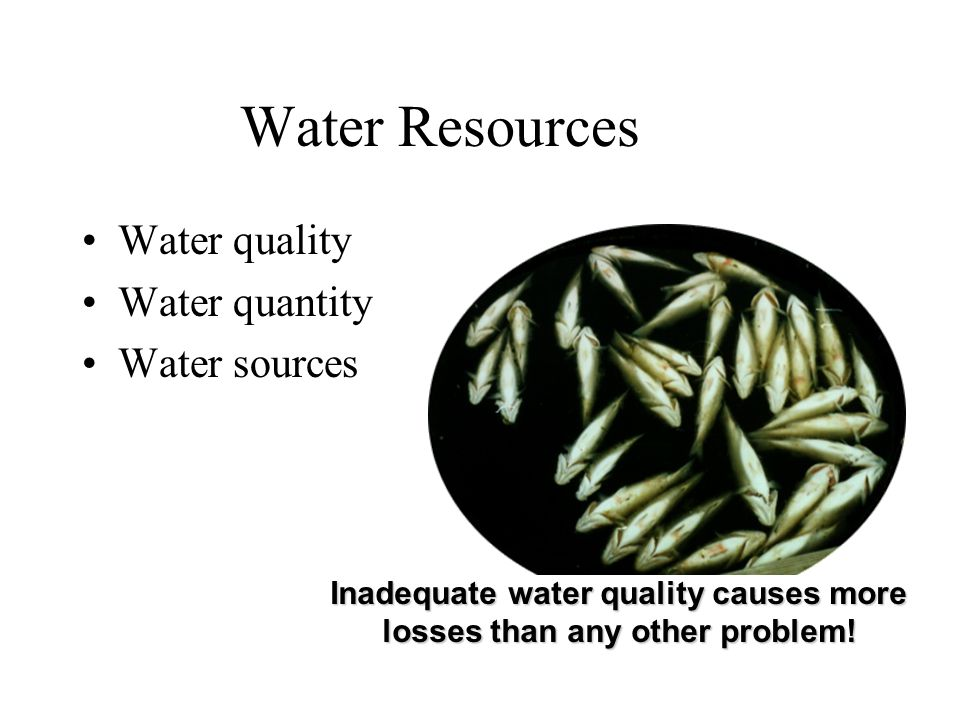 Water Resources Water quality Water quantity Water sources Inadequate water quality causes more losses than any other problem!