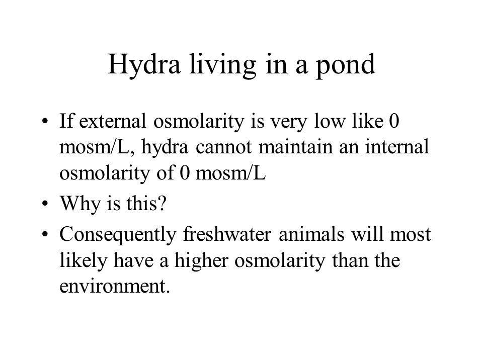 Hydra living in a pond If external osmolarity is very low like 0 mosm/L, hydra cannot maintain an internal osmolarity of 0 mosm/L Why is this? Consequ