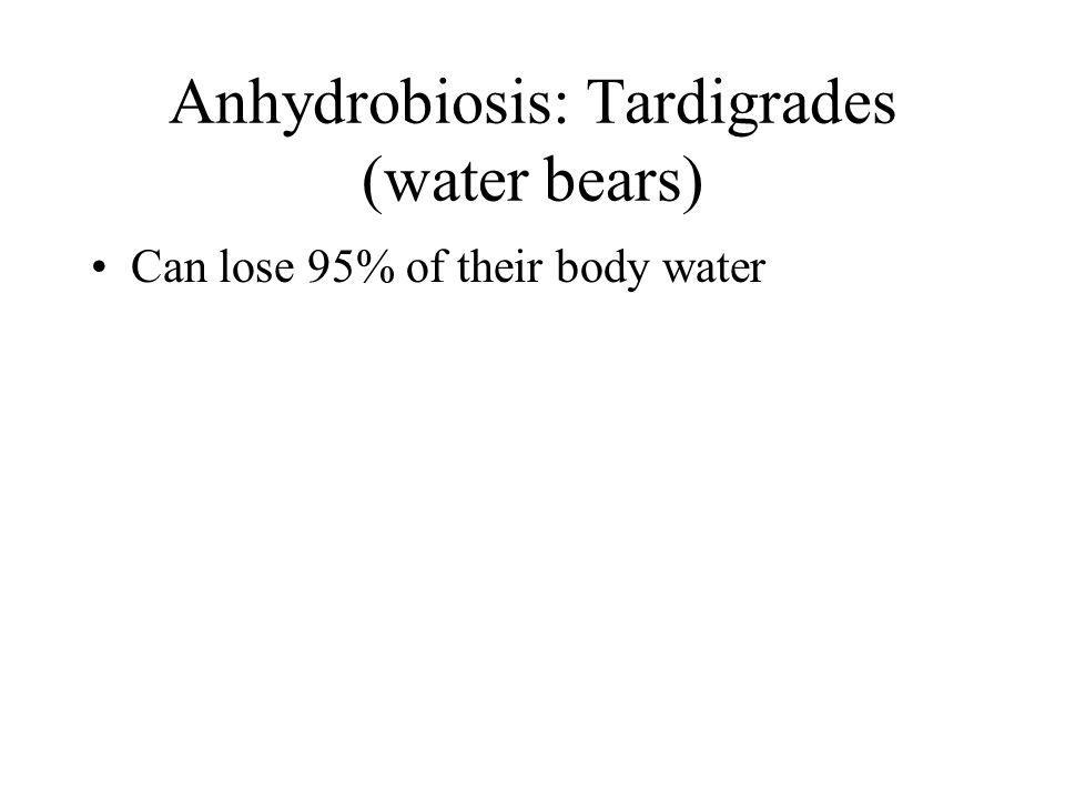 Anhydrobiosis: Tardigrades (water bears) Can lose 95% of their body water