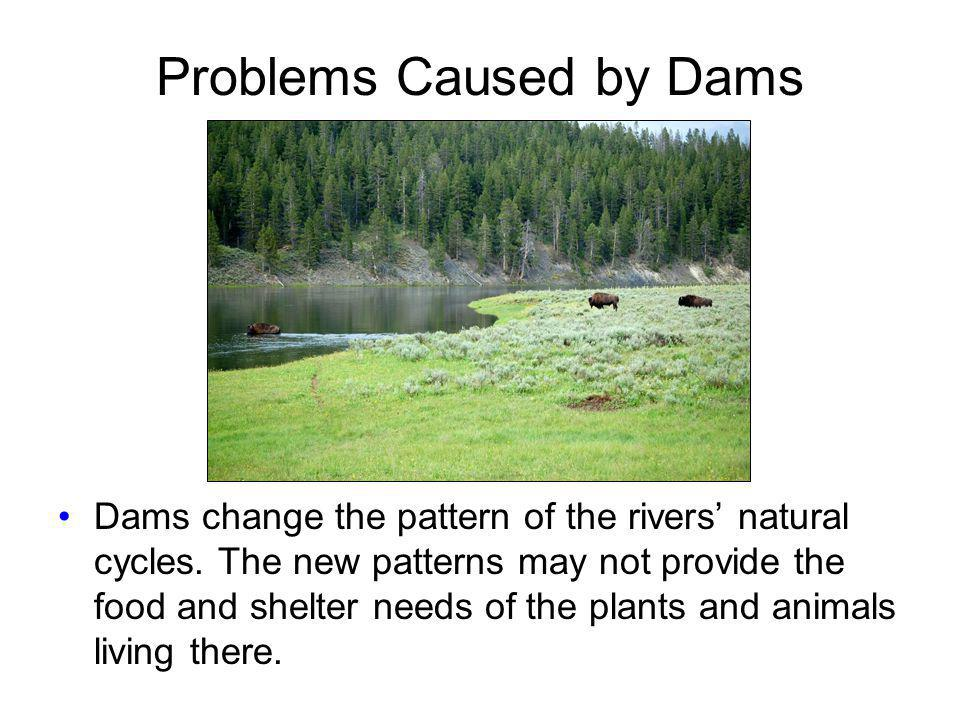 Problems Caused by Dams Dams change the pattern of the rivers natural cycles. The new patterns may not provide the food and shelter needs of the plant