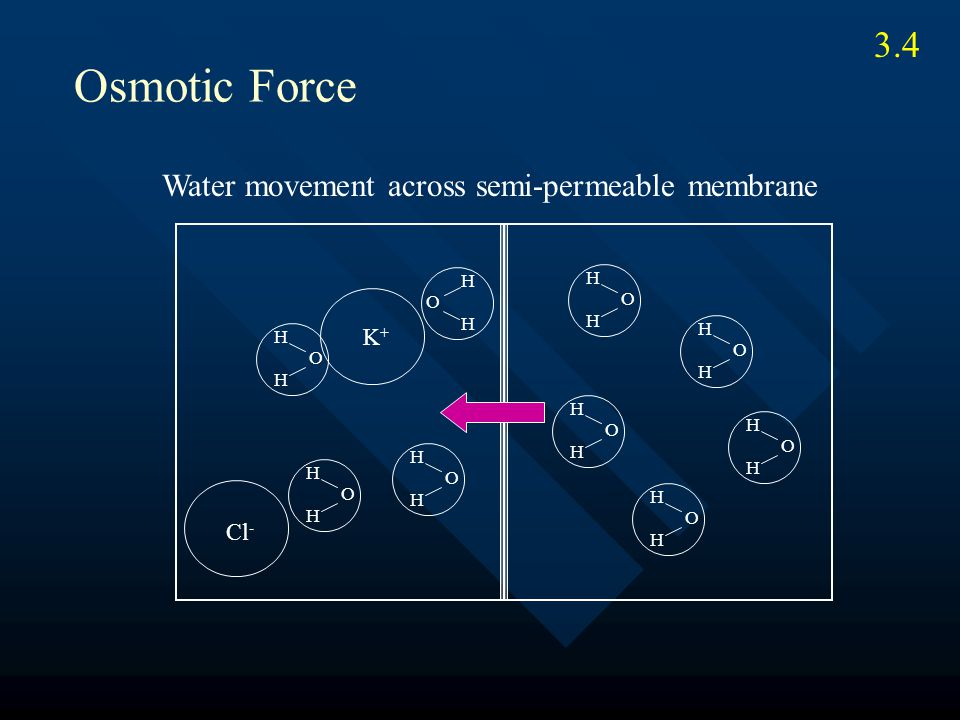 O H H O H H O H H O H H O H H O H H O H H O H H K+K+ Cl - O H H Osmotic Force Water movement across semi-permeable membrane 3.4
