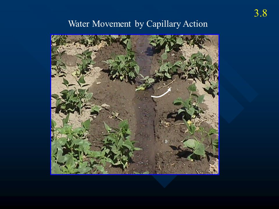 Water Movement by Capillary Action 3.8