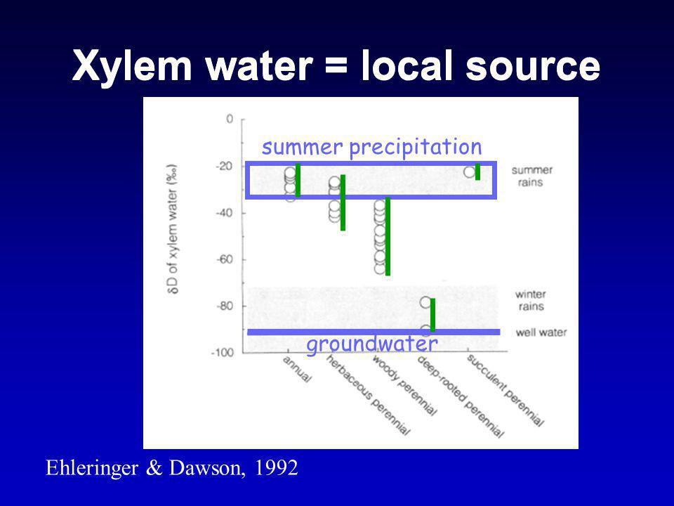 Xylem water = local source Ehleringer & Dawson, 1992 summer precipitation groundwater