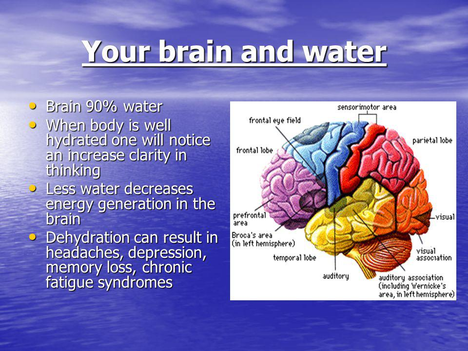 Your brain and water Brain 90% water Brain 90% water When body is well hydrated one will notice an increase clarity in thinking When body is well hydr
