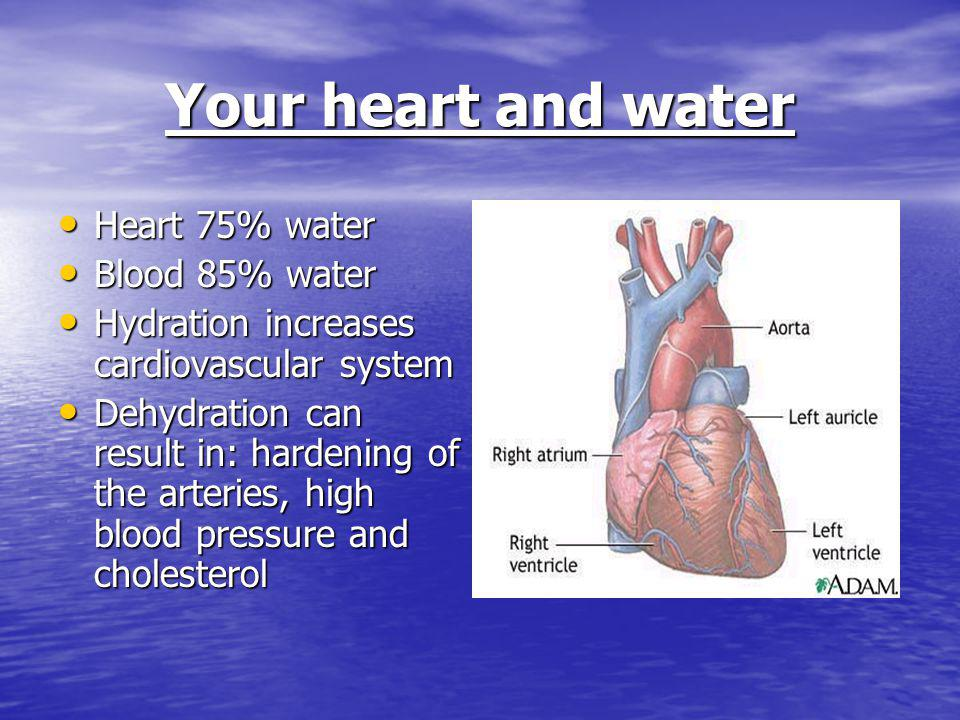Your heart and water Heart 75% water Heart 75% water Blood 85% water Blood 85% water Hydration increases cardiovascular system Hydration increases cardiovascular system Dehydration can result in: hardening of the arteries, high blood pressure and cholesterol Dehydration can result in: hardening of the arteries, high blood pressure and cholesterol