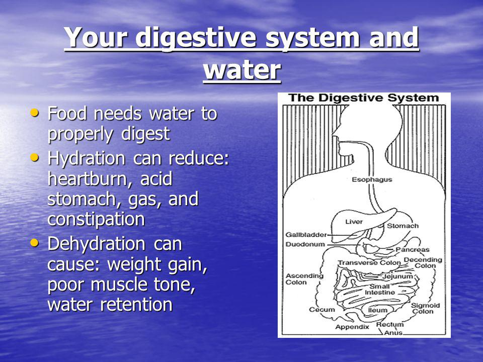Your digestive system and water Food needs water to properly digest Food needs water to properly digest Hydration can reduce: heartburn, acid stomach,