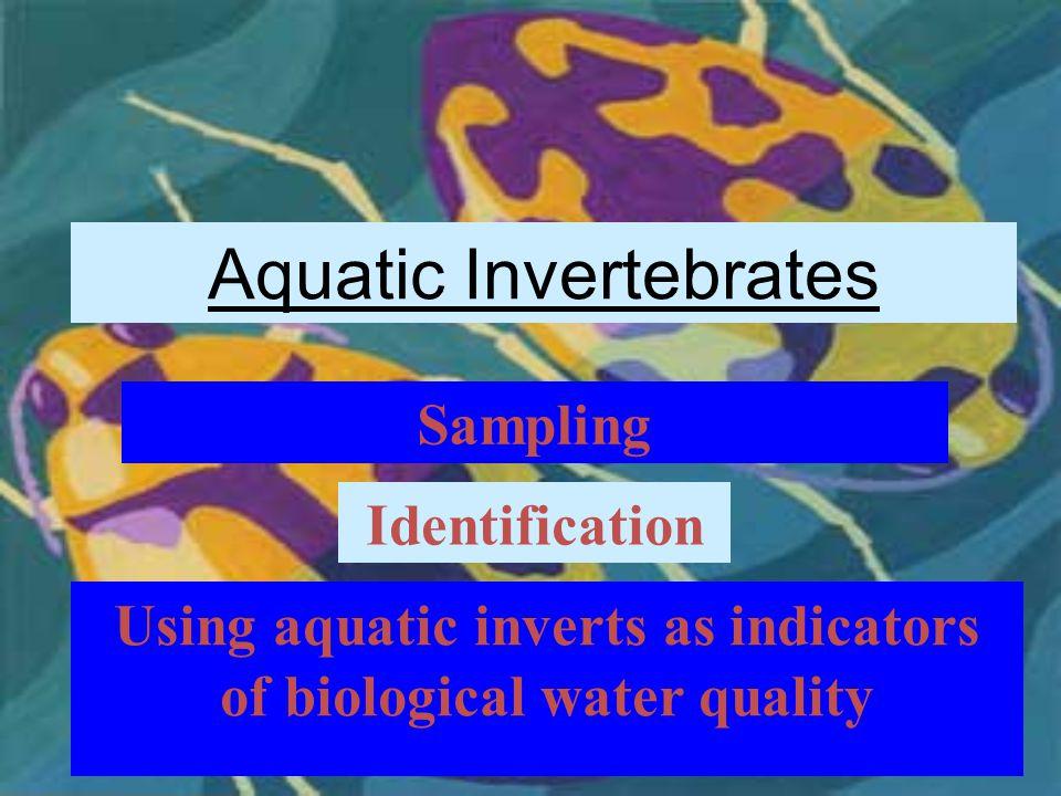 Aquatic Invertebrates Sampling Identification Using aquatic inverts as indicators of biological water quality