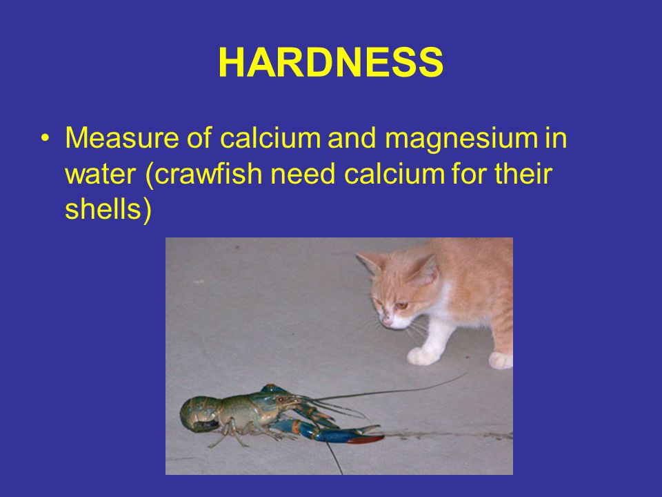HARDNESS Measure of calcium and magnesium in water (crawfish need calcium for their shells)