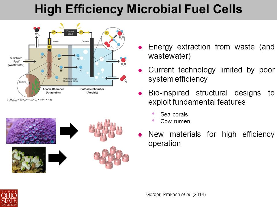 High Efficiency Microbial Fuel Cells Energy extraction from waste (and wastewater) Current technology limited by poor system efficiency Bio-inspired structural designs to exploit fundamental features Sea-corals Cow rumen New materials for high efficiency operation Gerber, Prakash et al.