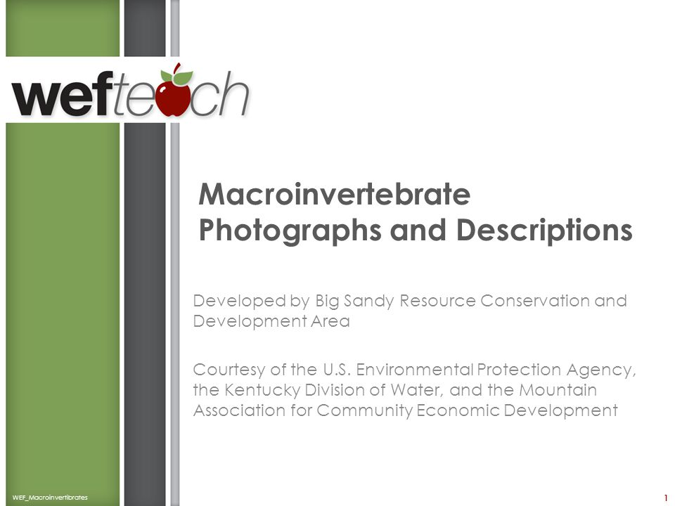 Macroinvertebrate Photographs and Descriptions Developed by Big Sandy Resource Conservation and Development Area Courtesy of the U.S. Environmental Pr