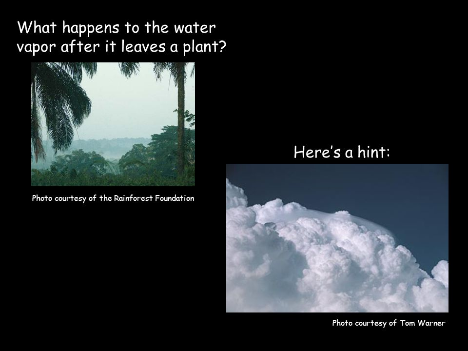 What happens to the water vapor after it leaves a plant.