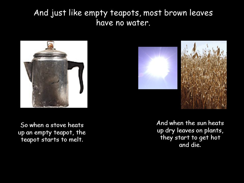 And just like empty teapots, most brown leaves have no water. So when a stove heats up an empty teapot, the teapot starts to melt. And when the sun he