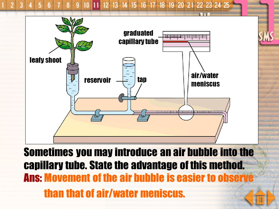 Does this apparatus give you an accurate measurement of the rate of transpiration ? Ans: No. It is because it only measures the rate of water uptake b