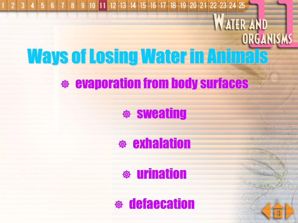 Ways of Gaining Water in Animals drinking eating from respiration occurs in cells which the water formed is called metabolic water