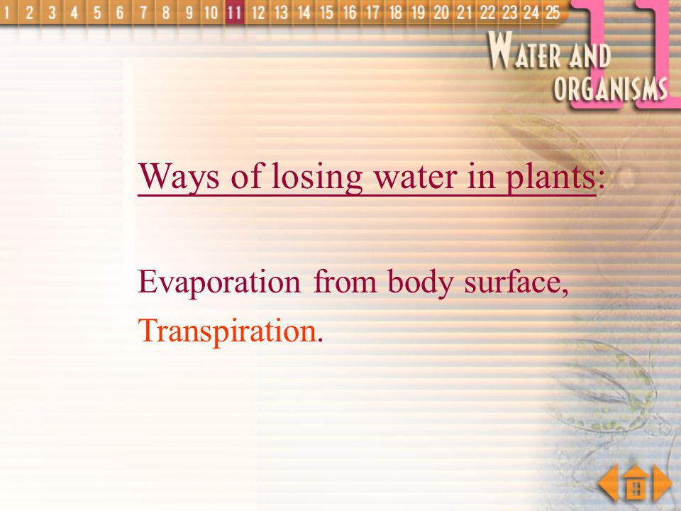 Ways of Losing Water in Animals evaporation from body surfaces sweating exhalation urination defaecation