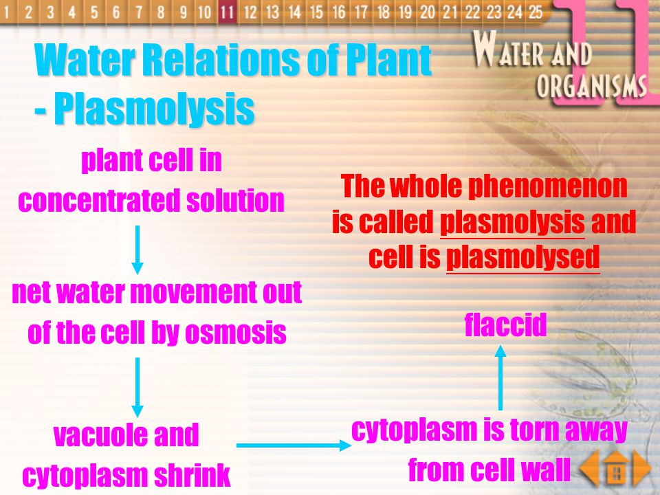 tendency of the cell to give out water increases water potential increases When water potential of cell = water potential of water Turgor occur (cell