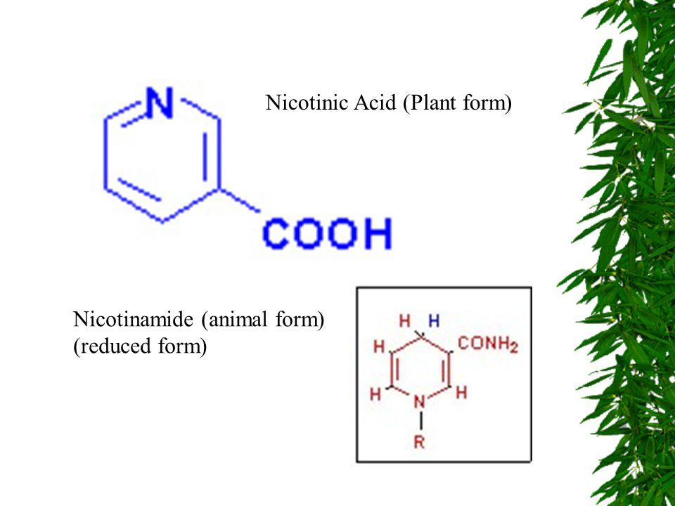 Nicotinic Acid (Plant form) Nicotinamide (animal form) (reduced form)