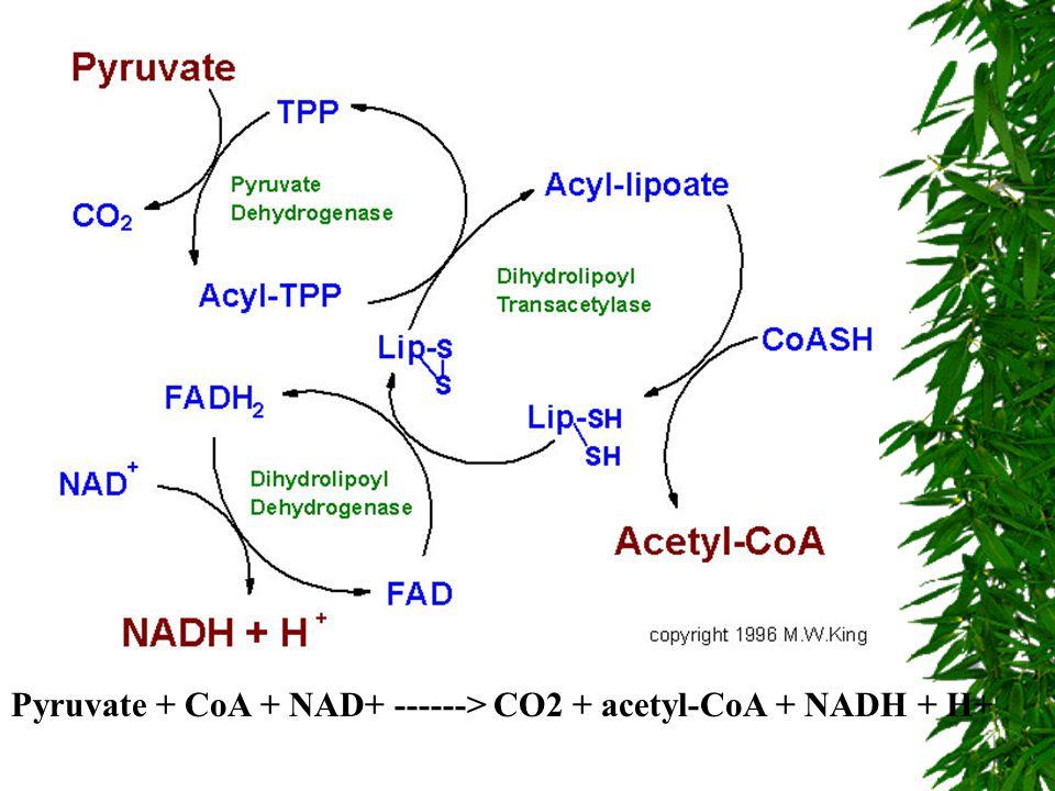 Pyruvate + CoA + NAD+ ------> CO2 + acetyl-CoA + NADH + H+