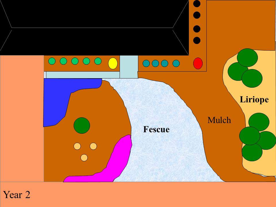 Fescue Liriope Mulch Year 2