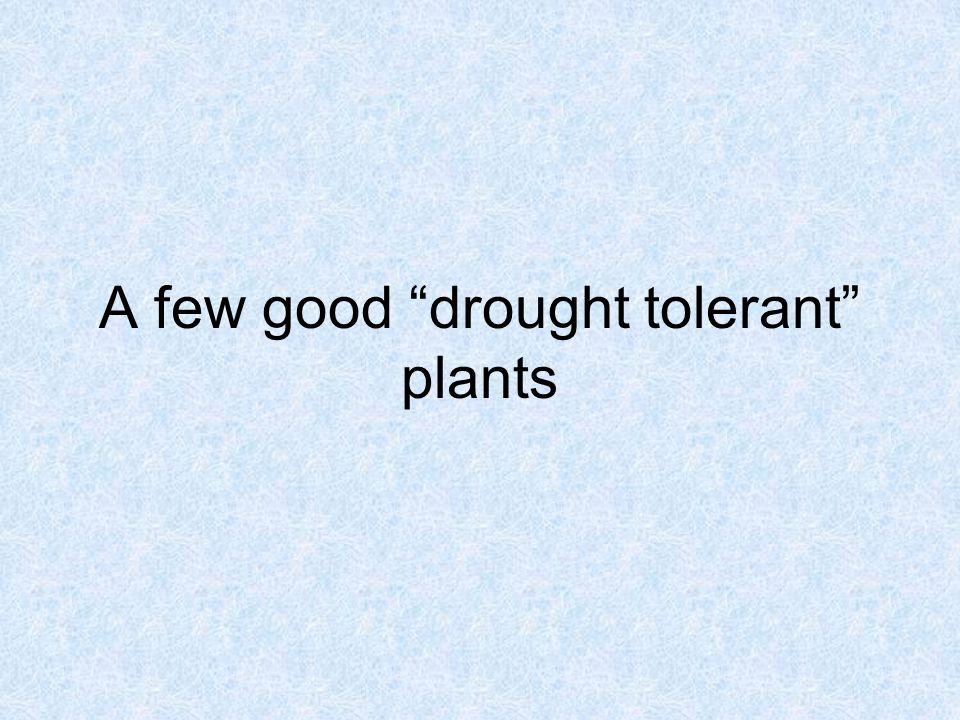A few good drought tolerant plants