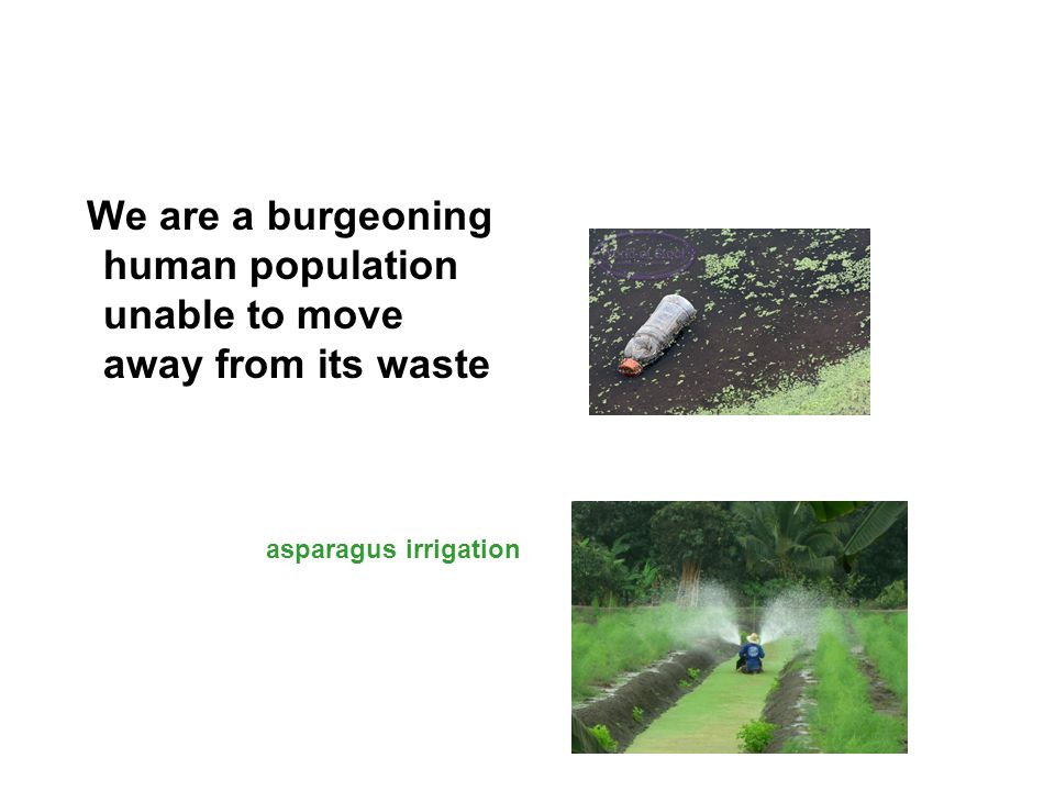 We are a burgeoning human population unable to move away from its waste asparagus irrigation