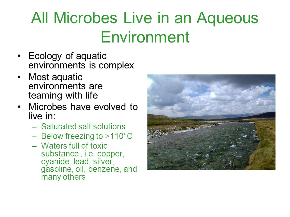 All Microbes Live in an Aqueous Environment Ecology of aquatic environments is complex Most aquatic environments are teaming with life Microbes have evolved to live in: –Saturated salt solutions –Below freezing to >110°C –Waters full of toxic substance, i.e.