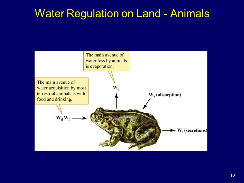 13 Water Regulation on Land - Animals