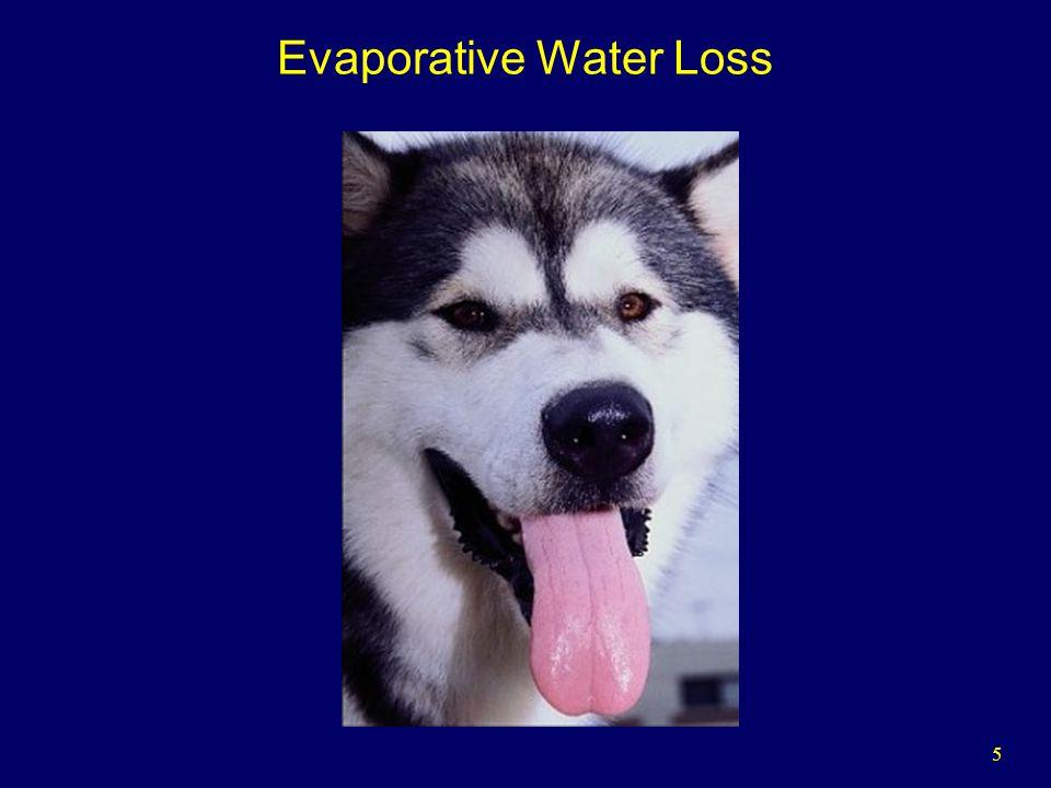 5 Evaporative Water Loss