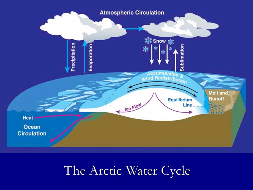 Global and Arctic Water Cycles Global and Arctic Water Cycles The Arctic Water Cycle