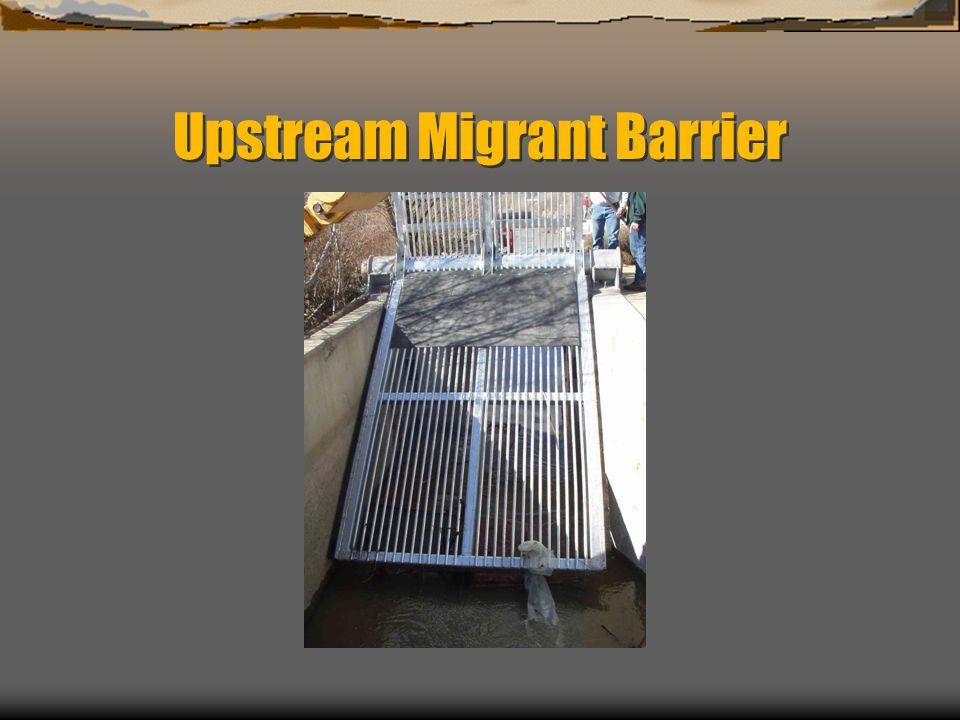 Upstream Migrant Barrier
